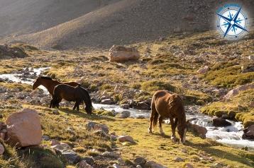 Horses along route 94