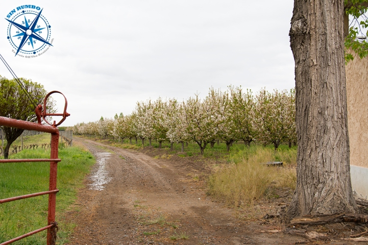 Fruit trees in bloom in Valle de Uco, Mendoza.