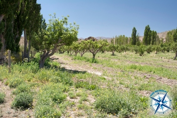 Apple trees in park El Leoncito, which used to be a small settlement and farm.