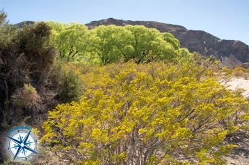 Spring is a beautiful season to hike here in park El Leoncito. It isn't too hot and the desert is blooming.