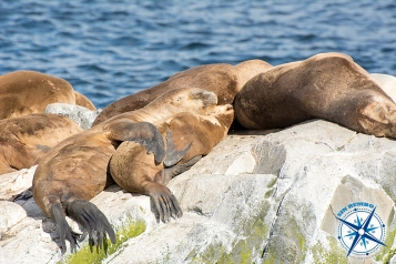 Seals - Ushuaia.