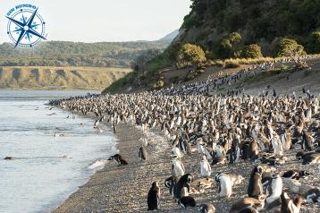 Penguins on Martillo island - Ushuaia.