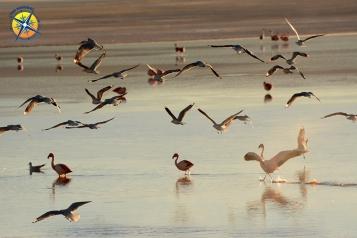 Flamingoes at the Laguna Colorada, Bolivia.